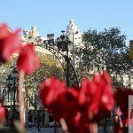 fiori Passeig de Gràcia