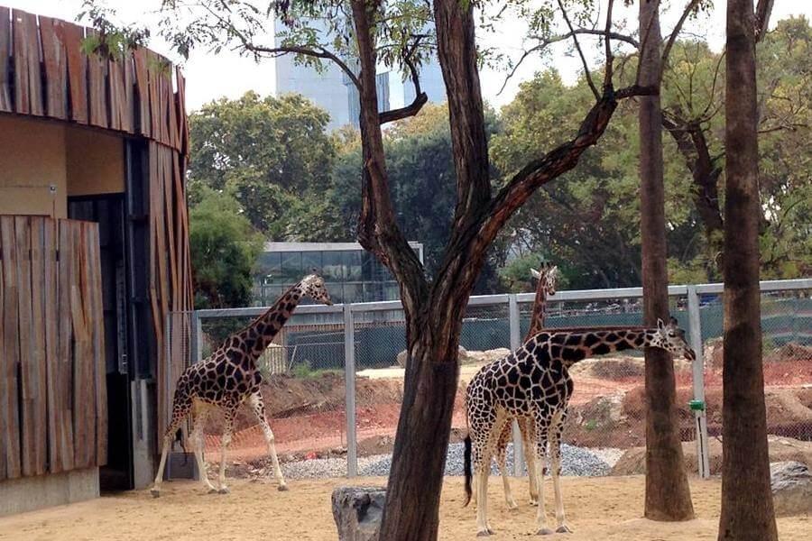 biglietti Zoo Barcellona