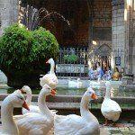 oche chiostro Cattedrale di Barcellona