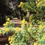 fiori Parco Labirinto Horta