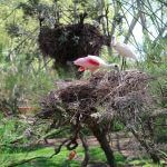 voliera Zoo Barcellona