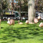 phoenicopterus Zoo Barcellona