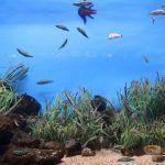 pesci Acquario di Barcellona