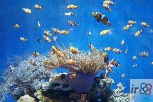 Aquarium Barcellona