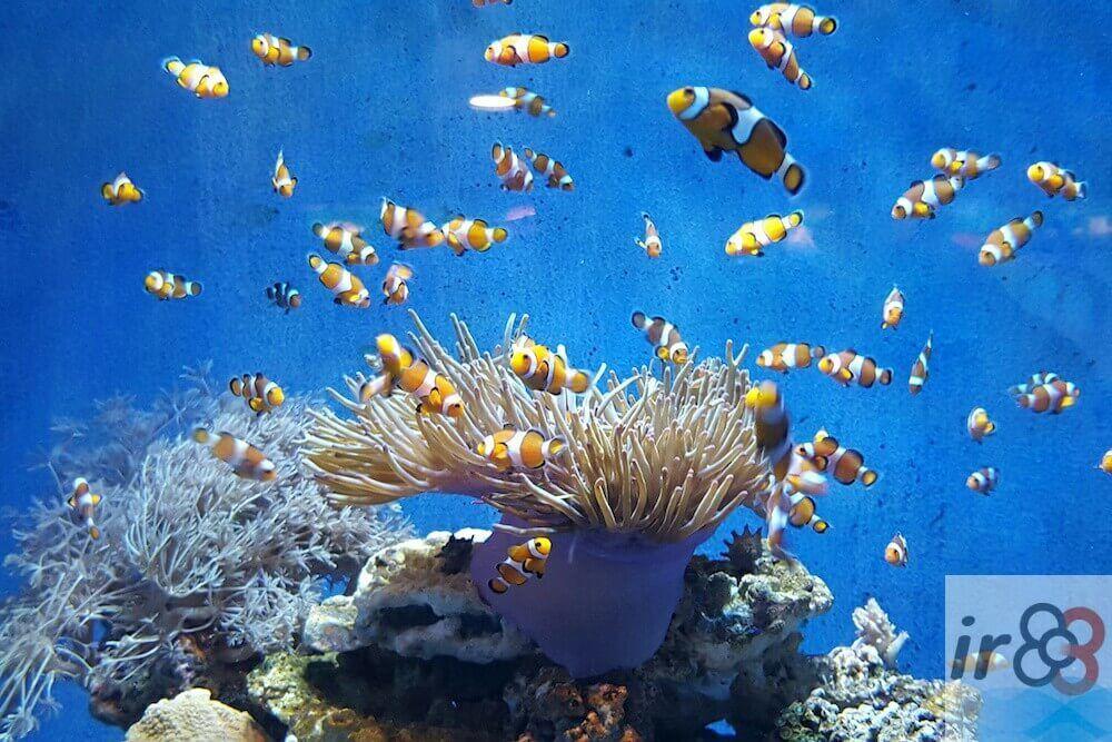 Aquarium di Barcellona