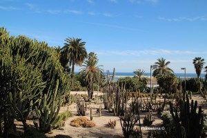 vegetation jardins Mossèn Costa i Llobera