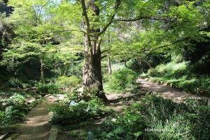 Jardin Botanique Historique