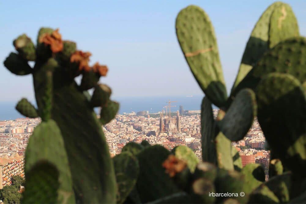vista della Sagrada Familia dal Turo de la Rovira