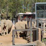 elefanti Zoo Barcellona