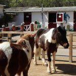pony Zoo Barcellona