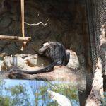 primate Zoo Barcellona
