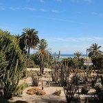 vegetazione jardins Mossèn Costa i Llobera