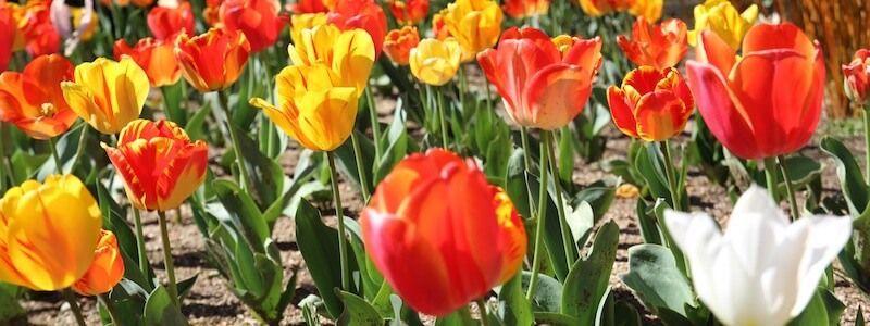 fiori parco Montjuïc