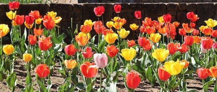 fiori giardini Mossèn Cinto Verdaguer