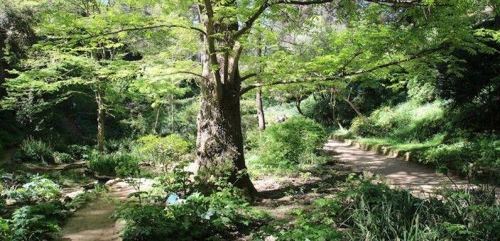 Giardino Botanico Storico Barcellona