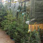 alberi di Natale Fiera Sagrada Familia